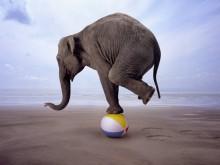 27feb_elephant-circus-acrobat
