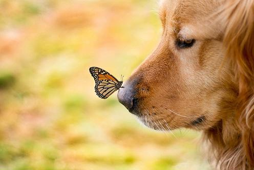 cute-butterfly-sitting-nose-funny-dog