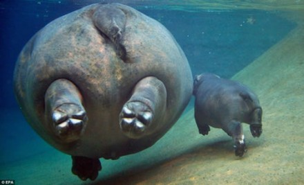 hippo-butts
