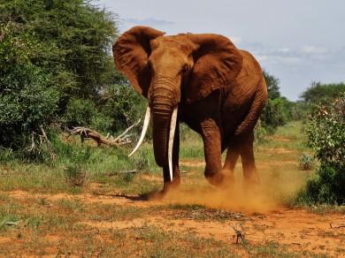 safari1-107-390x292