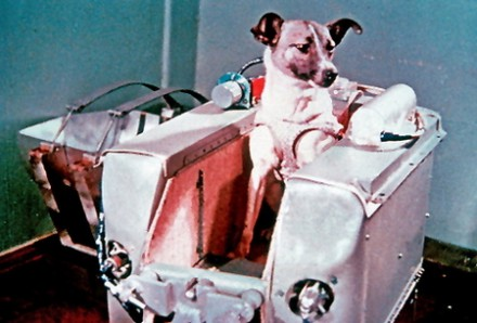 Paws-for-the-News-laika-space-tourist-first-dog-in-space-soviet-union-Paws-for-the-News-www.pawsforthenews.tv_