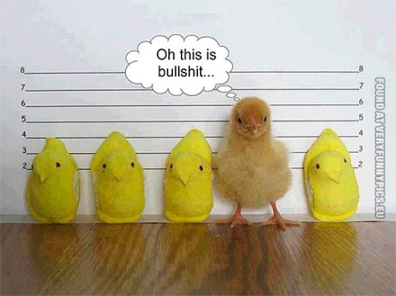 funny-picture-chicken-lineup
